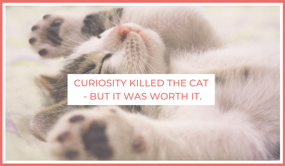 Curiosity Killed the Cat - But It Was Worth It   Joe Sanok   Thursday is the New Friday   Develop Curiosity   4-day workweek
